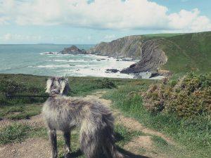 Country Walks Devon
